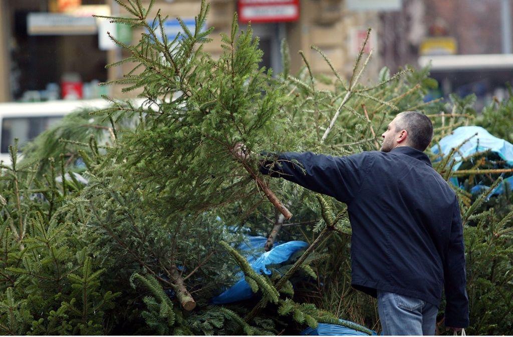 Natürlich nur komplett ohne Schmuck werden die Bäume an den Sammelstellen angenommen Foto: Michael Steinert/Michael Steinert