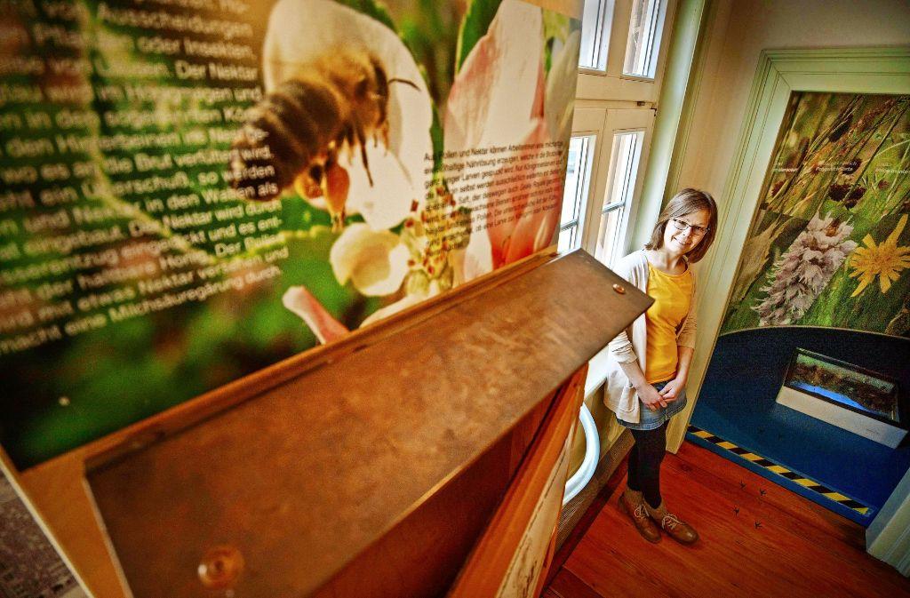 Noch bis Mai ist der Bienenstock im Naturschutzzentrum verwaist. Dann kann Meika Bakker die fleißigen Insekten beobachten. Foto: Stoppel