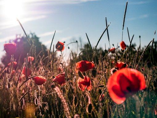 Blumen richtig fotografieren