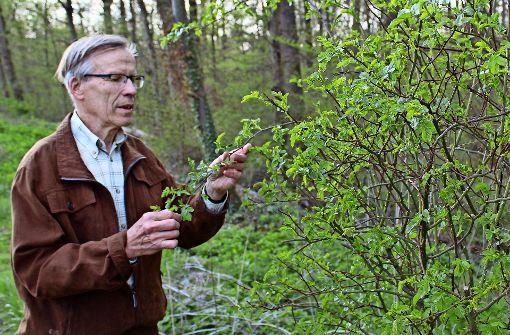 Rentner pflanzt Rosen im Stadtwald