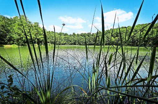Die Seewaldseen: Badefreuden in natürlicher Idylle