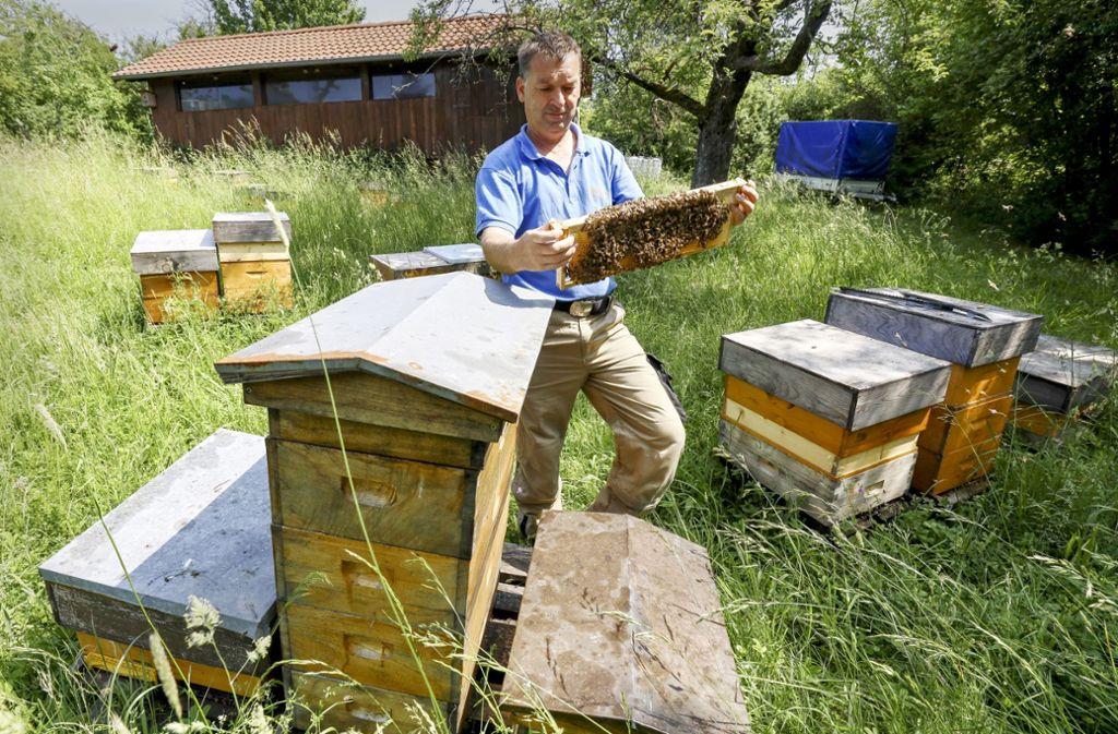 Der Imkereimeister Robert Löffler zeigt an einem seiner Bienenstände in Weil im Schönbuch einen Bienenstamm. Foto: factum/
