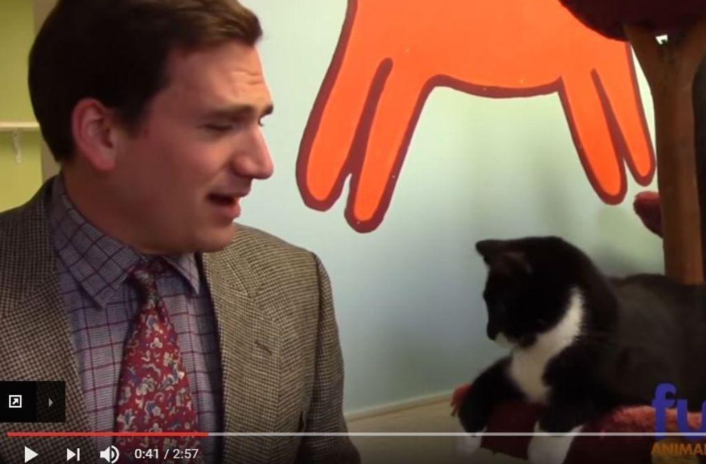 Paul Preston versucht, die Katzen an den Mann oder die Frau zu bringen. Foto: Screenshot Youtube / Furkids Animal Rescue and Shelters