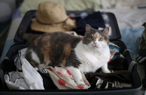 Wohin mit Haustieren in den Ferien?