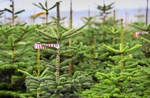 Gesucht: Nachhaltige Weihnachtsdekoration