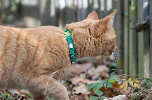 Luftgewehrschüsse auf Katze sind keine Tierquälerei