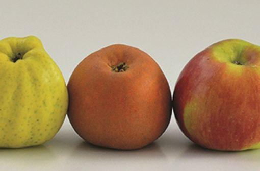 Die Vermessung des Apfels