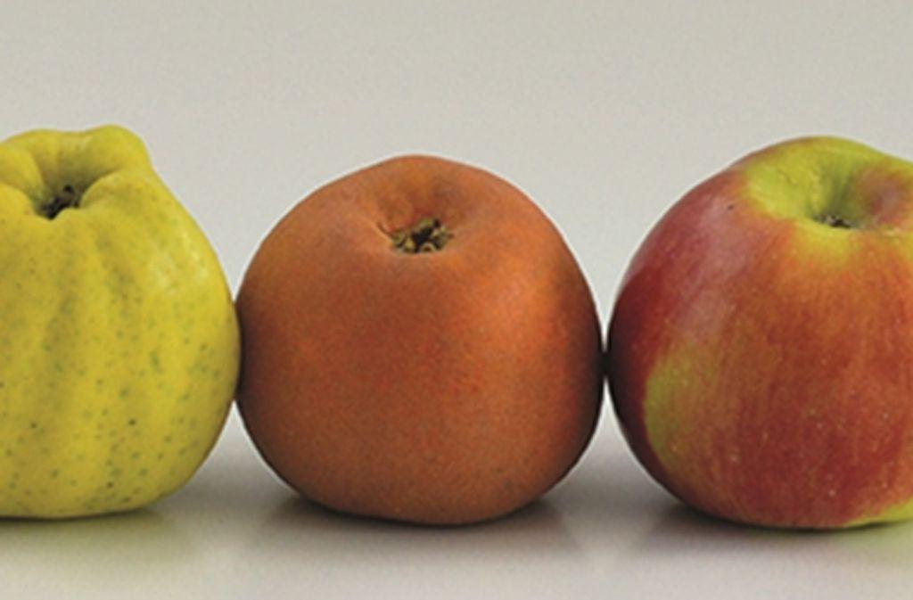 Apfel ist nicht gleich Apfel: Vor allem alte Sorten unterscheiden sich stark, äußerlich wie geschmacklich. Foto: dpa