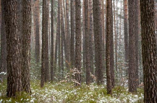 Schreitherapie im Wald endet mit Polizeieinsatz