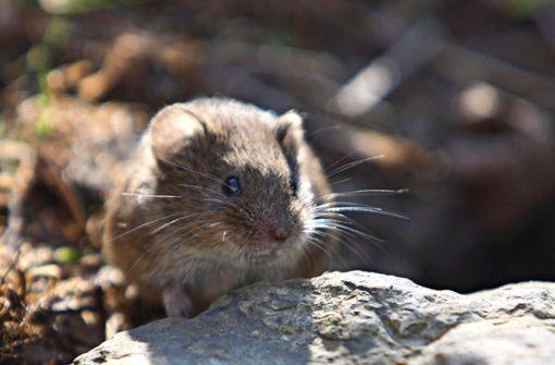 Ohne Maus ist auf dem Speiseplan nix los
