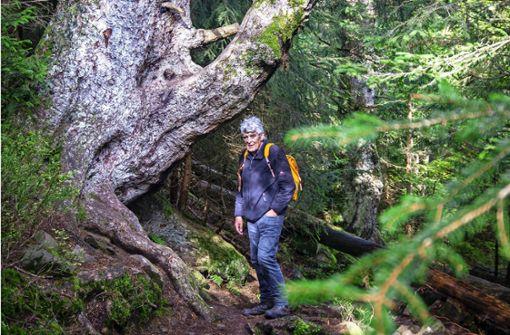 Der alte Mann und der Wald