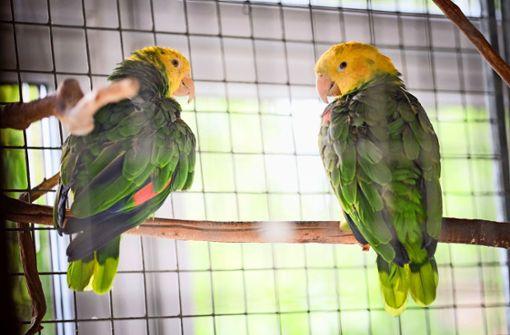 Zimmerservice für Gelbkopf-Amazonen
