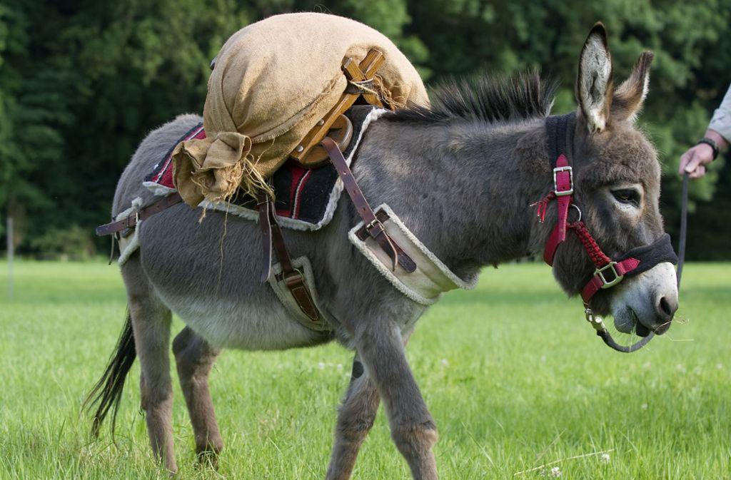 Als Lastentiere werden Esel nur noch selten genutzt. Foto: dpa