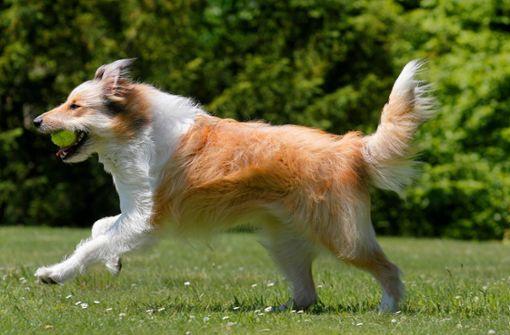 So halten Sie Ihren Hund im Alter fit