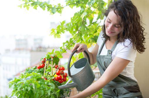 Eigenes Gemüse im Balkongarten anbauen: Unsere Tipps