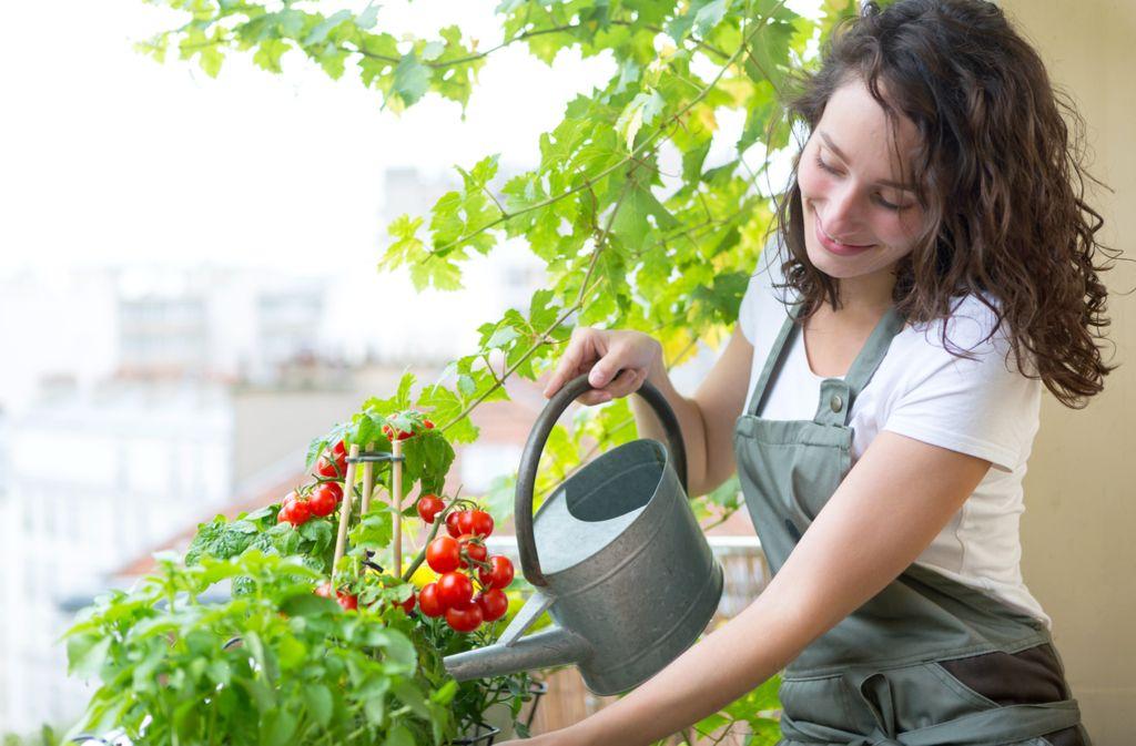 Eigenes Gemüse im Balkongarten anbauen: Unsere Tipps Foto: Production Perig/Shutterstock