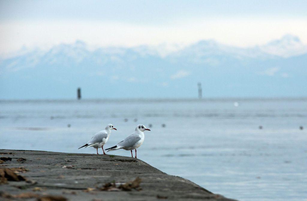 Wenige  Kilometer von Konstanz war am Dienstag   ein leichtes Erdbeben spürbar. (Symbolfoto) Foto: dpa