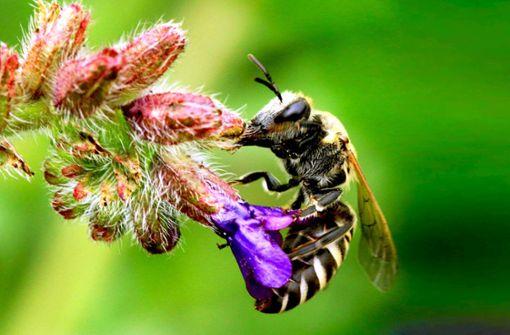 Pro Biene hofft auf Rückenwind