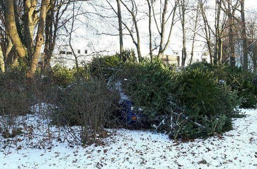 Auto unter Weihnachtsbäumen begraben