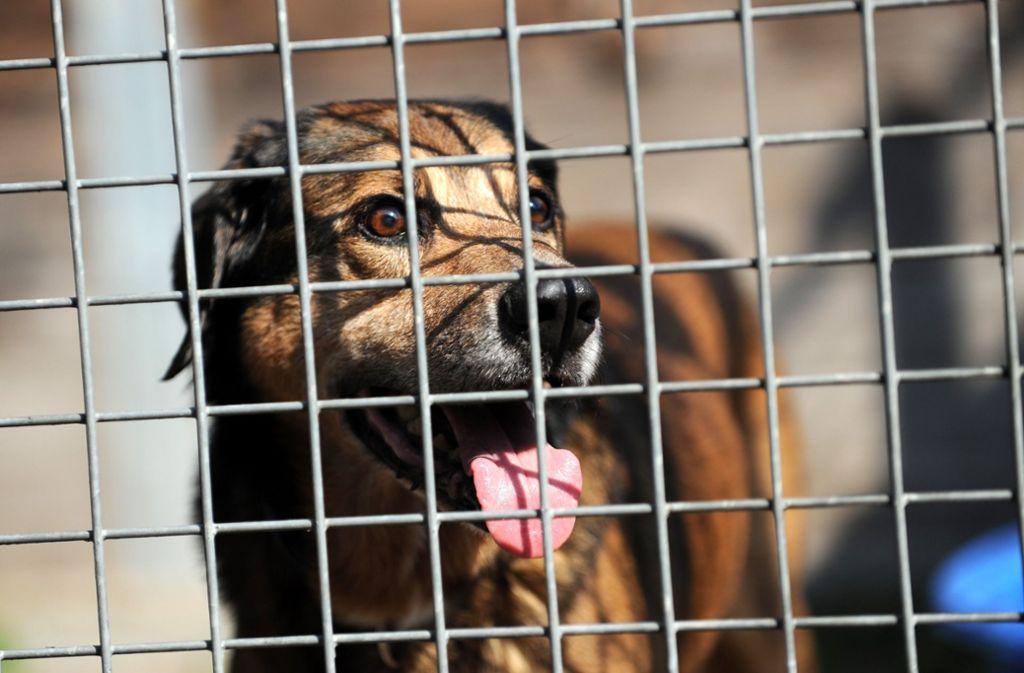 Für aus Tierheimen vermittelte Hunde gibt es in Ostfildern auch künftig keine Steuerermäßigung. (Symbolfoto) Foto: dpa