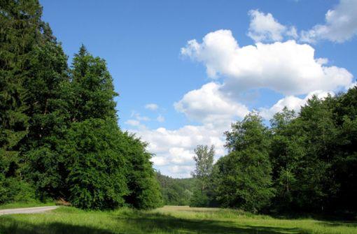 """Der Wald ist eine """"gut geschminkte todkranke Patientin"""""""