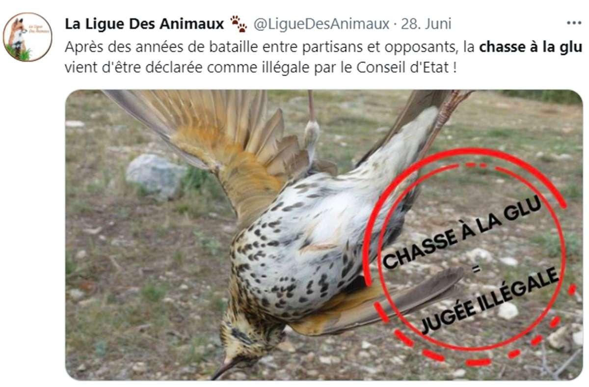 Tierschützer in Frankreich feiern das Verbot der Leimrutenjagd auf Vögel. Mit solchen Fotos haben sie in den sozialen Netzwerken immer wieder auf deren Grausamkeit aufmerksam gemacht. Foto: Screenshot/Twitter