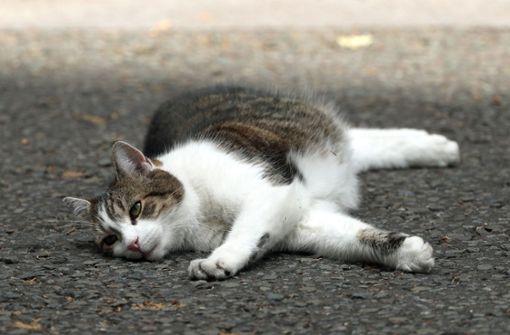 Wegen Katze gebremst und Unfall verursacht