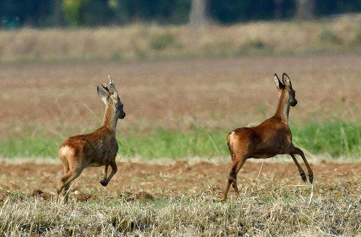 Unbekannte lassen 150 Hirsche frei