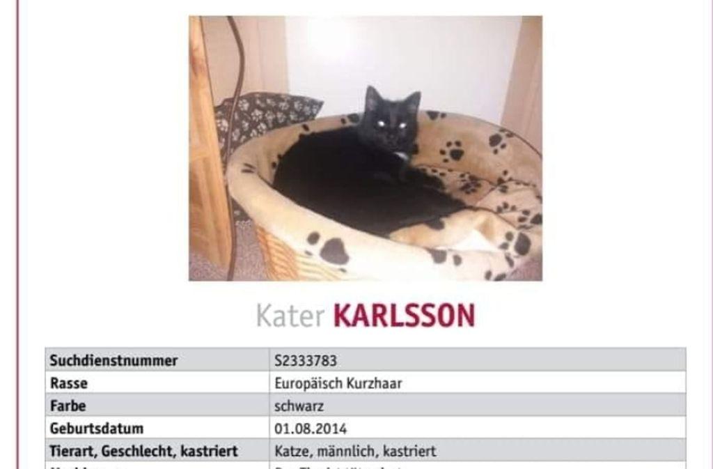 Mit diesem Plakat suchte Katrin Wiedmer nach dem vermissten Kater. Foto: Screenshot Facebook