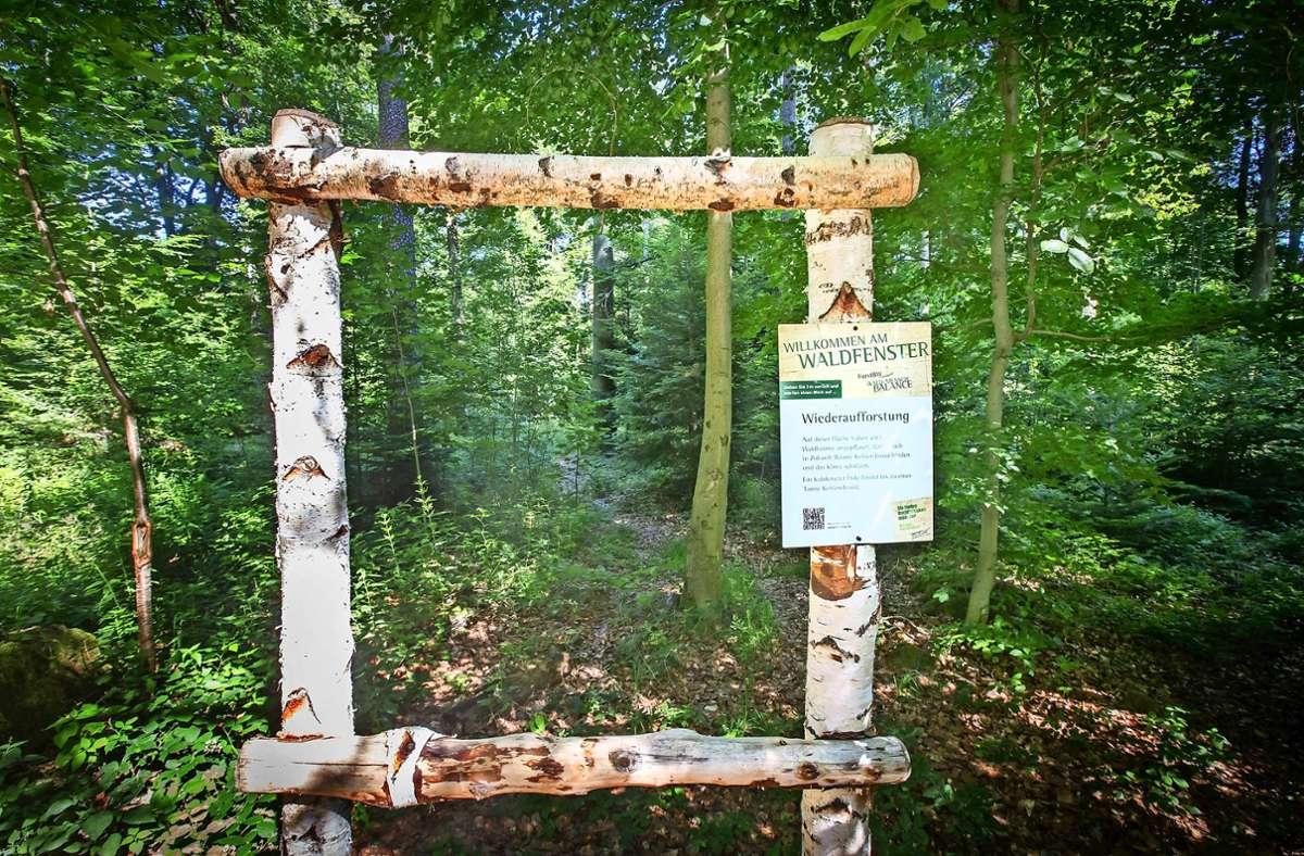 Das Haus des Waldes in Degerloch bietet neue Blicke auf den Wald. Foto: Archiv  Lg/Zweygarth