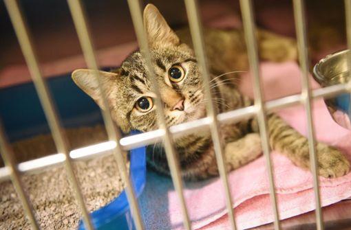 Zwei Katzen nach positivem Corona-Test in Quarantäne