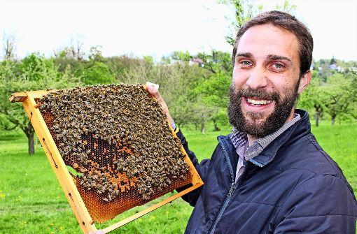 Bei Regen müssen die Bienen darben