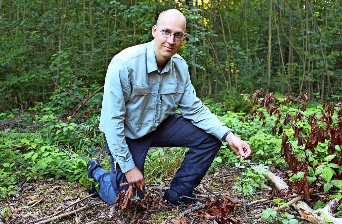 Sebastian Pizur ist Leiter des Forstreviers, das sich etwa zwischen Vaihingen und Plieningen erstreckt. Er  zeigt eine Eiche, die von Rehen verbissen worden ist. Foto: Caroline Holowiecki