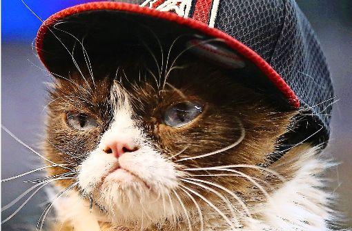 Die bestbezahlte Katze der Welt