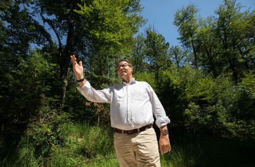 Masterplan für den Wald