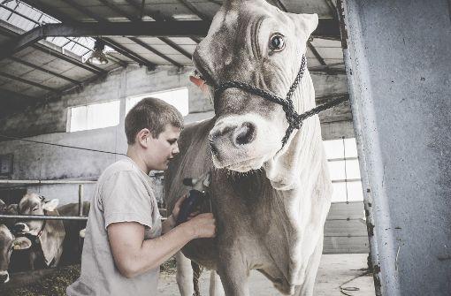 Styling für das Rind