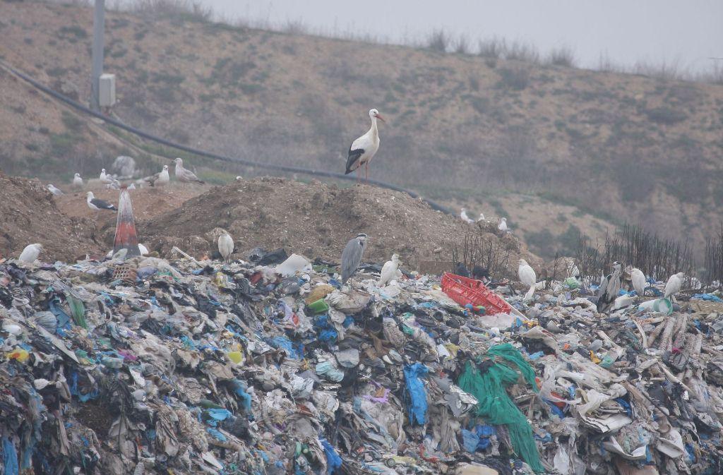 Alle unsere drei Senderstörche haben ihr Quartier auf spanischen Müllkippen bezogen. Die Bilderstrecke zeigt, wo Ingo, Libi und Zozu den Winter 2017/18 genau verbringen werden. Foto: Archiv