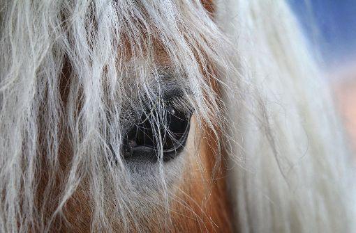 Pferd stirbt nach Unfall