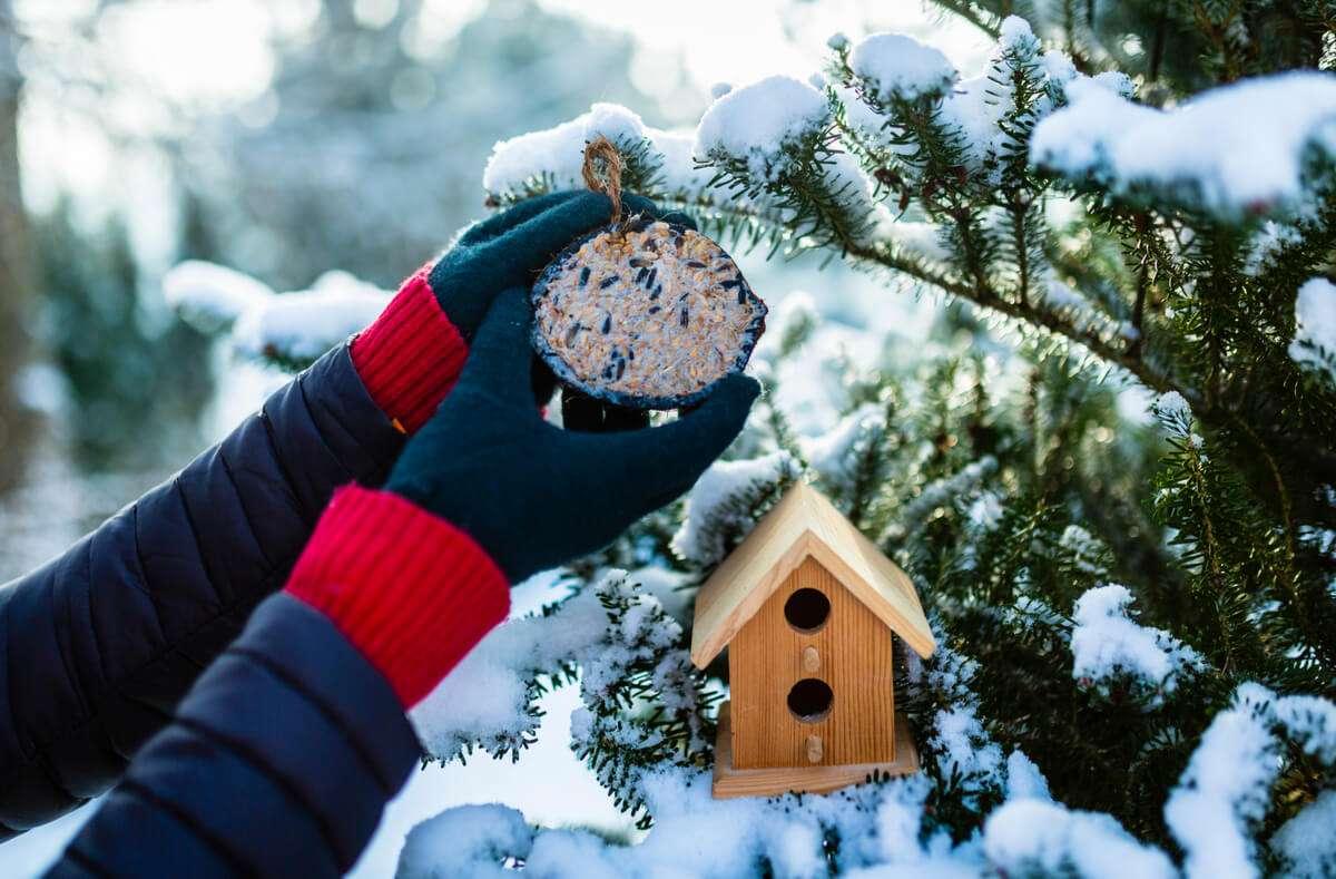 Besonders zur kalten Jahreszeit finden immer weniger Vögel Futter in der Natur, weshalb Sie sich im Winter besonders auf die von Ihnen gemachten Leckereien freuen. Foto: iMarzi / Shutterstock.com