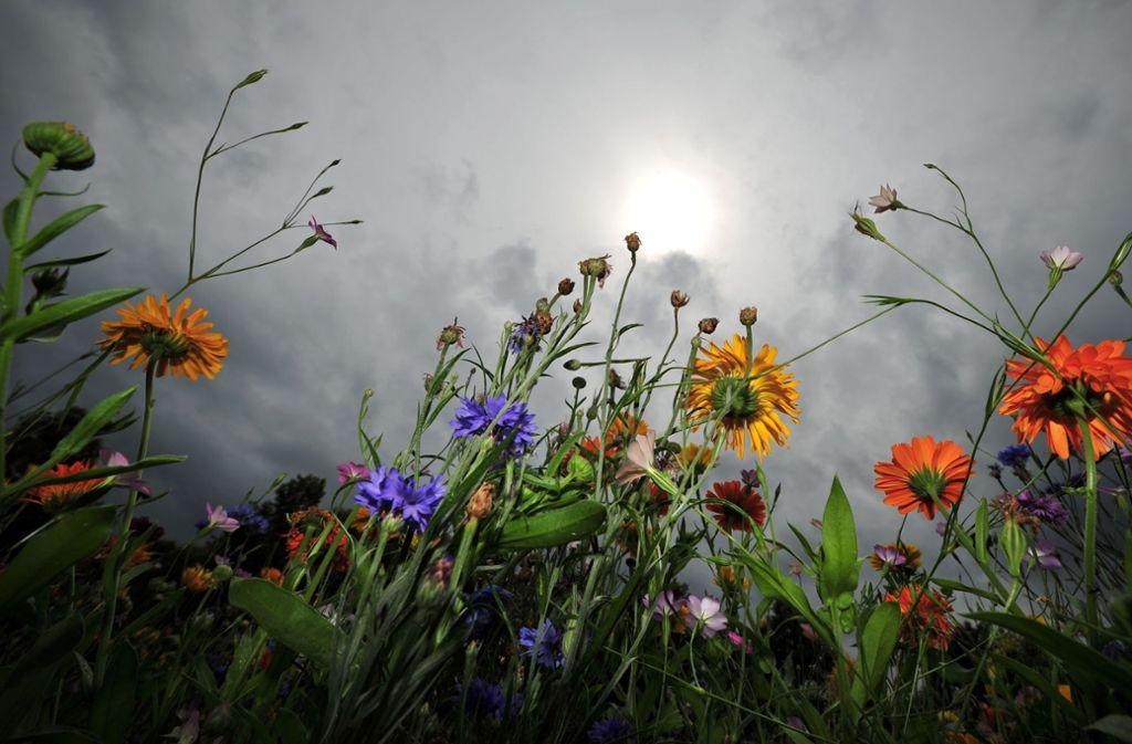 Das wechselhafte Wetter bleibt auch an den Pfingsttagen bestehen. Foto: dpa
