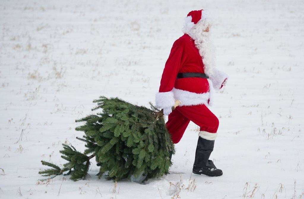 Woher der Weihnachtsmann seine Bäume bezieht, ist unbekannt. Foto: dpa-Zentralbild