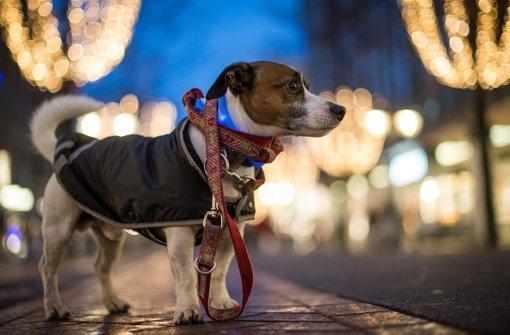 Hundehasser legen immer wieder Giftköder aus. Foto: dpa