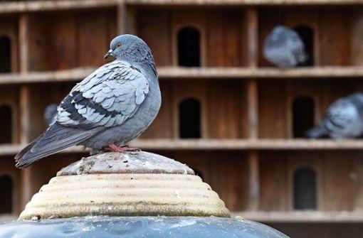 Hilfe für den Vogel mit dem miesen Image