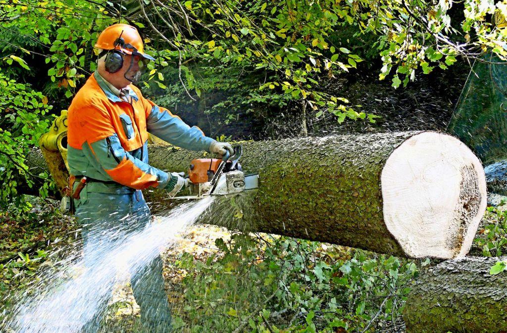 Aus Sicht vieler Bürger wird im Stuttgarter Wald zu oft die Säge angesetzt. Foto: dpa