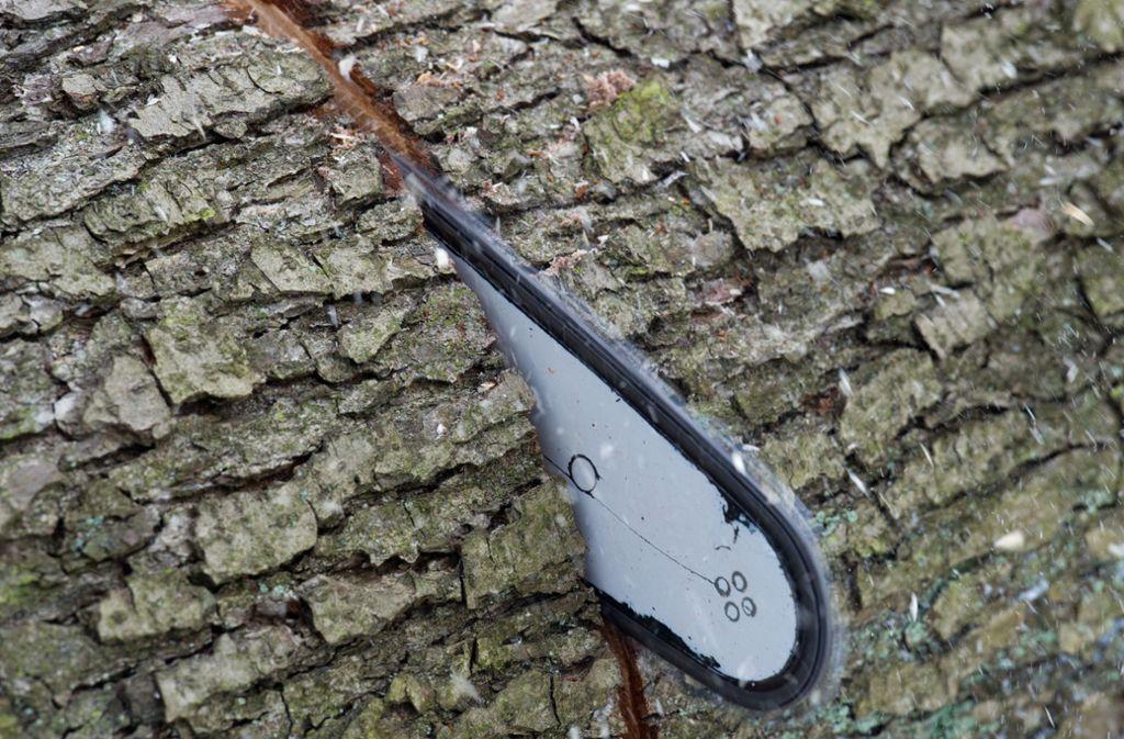Tödlicher Unfall im Kreis Göppingen: Ein Mann starb bei Baumfällarbeiten (Symbolbild). Foto: dpa
