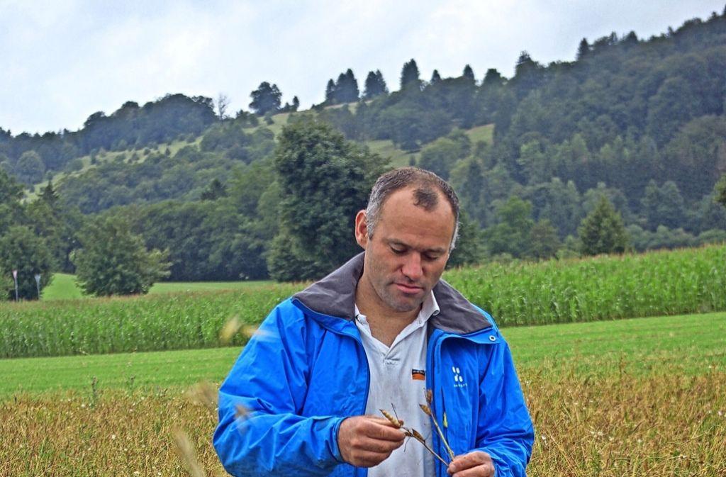 Der Bioland-Bauer Wilfried Straub prüft, ob seine Lupinen schon reif zum Dreschen sind. Foto: red