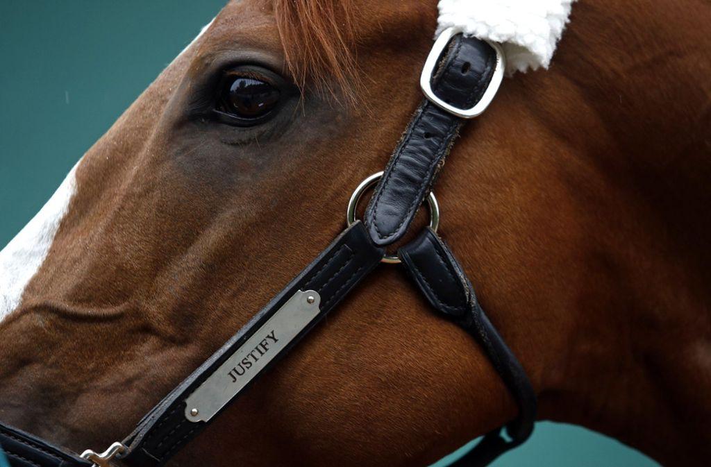 In Australien werden frühere Rennpferde offenbar im großen Stil geschlachtet. Foto: dpa/Patrick Semansky