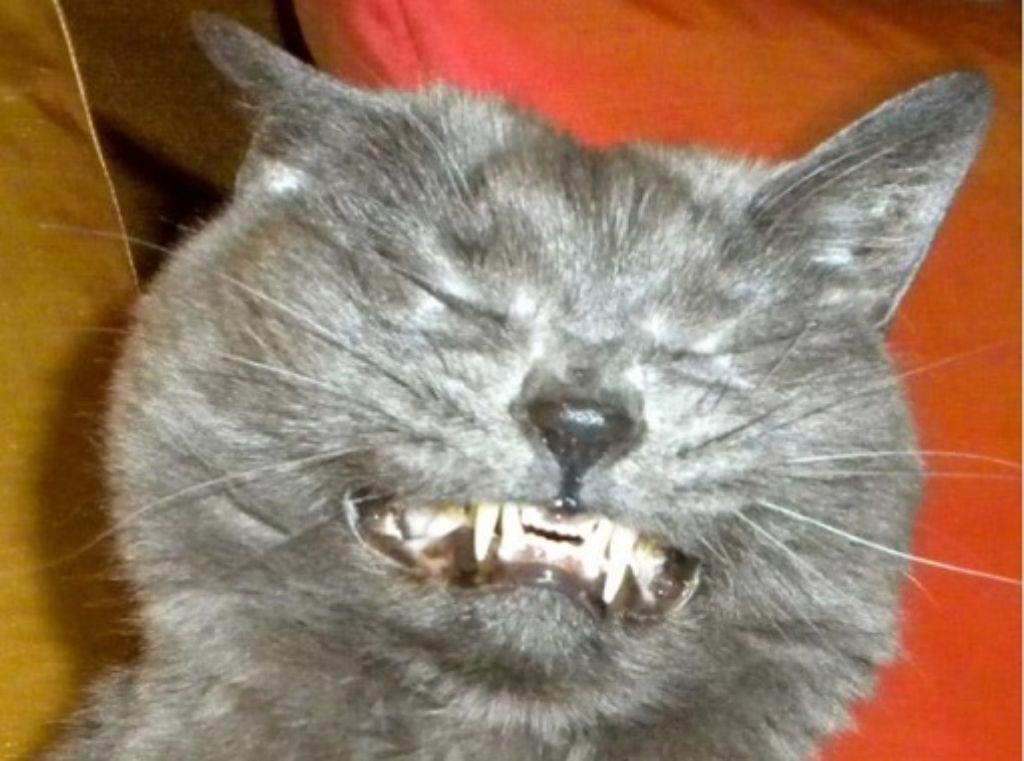 Katzencontent regiert im Netz auch in Form von Listen: dieses Bild findet sich in der Liste 15 Tiere, die kurz vorm Niesen abgelichtet wurden. Foto: i.imgur.com via upcoming.de