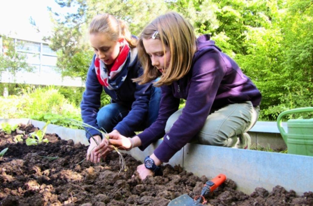 Die Mädchen von der Garten-AG Foto: Sägesser