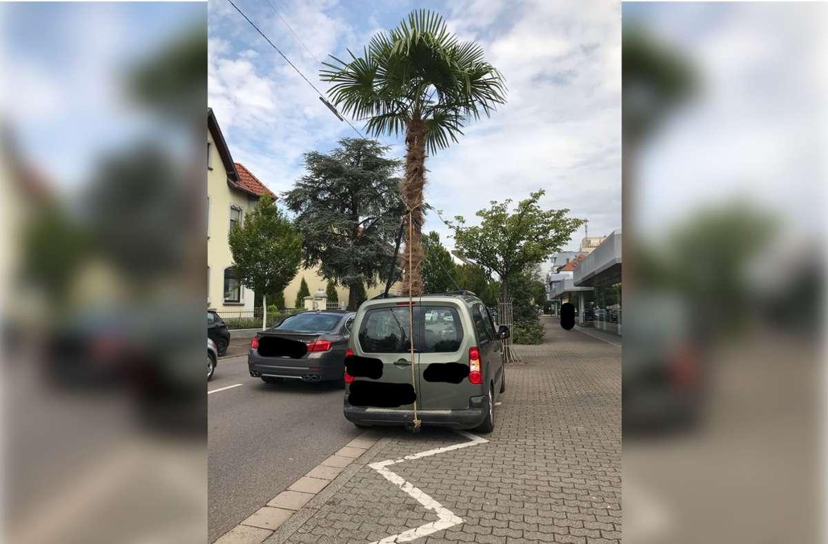 Die Polizei in Saarlouis hat einen PKW mit Palme gestoppt. Foto: Polizei Saarlouis